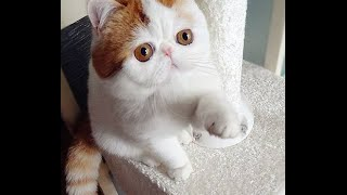 100 Most Beautiful Cats In The World