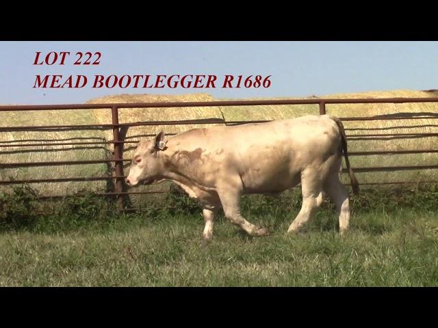 Mead Angus Lot 222