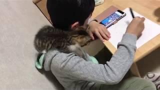 息子のことが大好きな子猫がかわいい