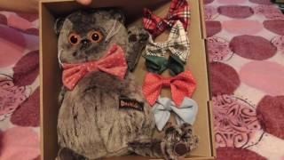 Басик с набором галстуков