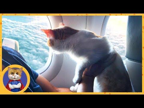 Котик Рыжик отправляется в путешествие. Один день кота путешественника: от рассвета до заката
