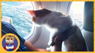 Котик Рыжик отправляется в путешествие. Один день кота - путешественника: от рассвета до заката