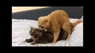 cat meting (sex ) full documentary
