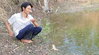 Cấm Câu Ếch Hầm Cá Tra Toàn Ếch Cụ Khủng Lồ. Minh Bẫy Rắn #214
