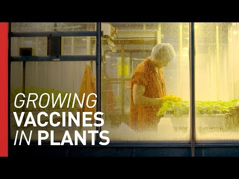 Could Growing Vaccines in Plants Save Lives?