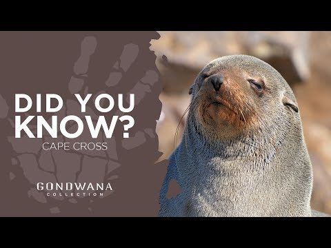 Did You Know - Cape Cross Namibia