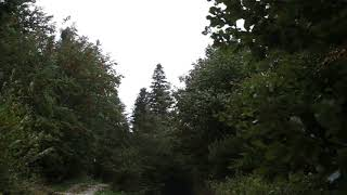 Download Video Wind Blowing Through Forest with Light Rain 1 Hour /  Wind Sound Relaxation MP3 3GP MP4