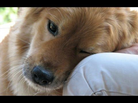 Xin Hãy Tham Gia Ký Tên Để Bảo Vệ Chó
