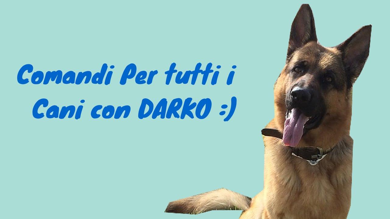 Comandi per tutti i cani by darko youtube for I cani youtube