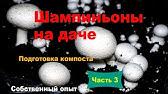 Компост для выращивания шампиньонов - как сделать - Крым - YouTube