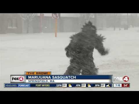 Marijuana-themed Sasquatch crashed live shot
