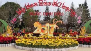 [ Hội hoa đào] Hoa đào tết đẹp nhất Lạng Sơn