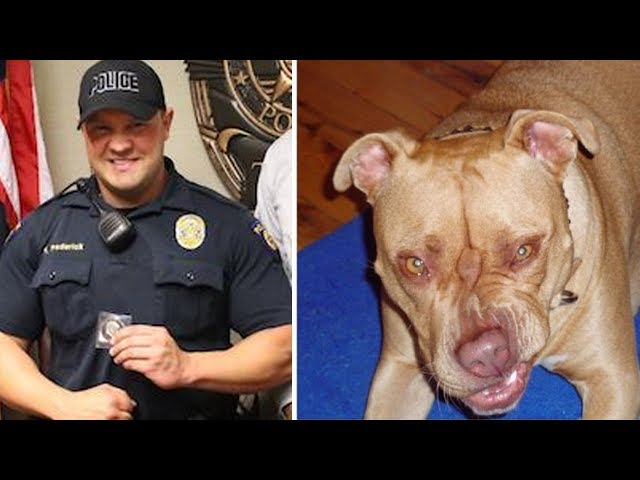 Stray Gigantic Pit Bull Charges At Police Officer, Then Does Something Surprising