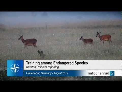 Training among endangered species