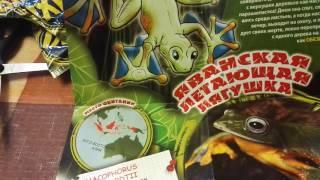 Лягушки МАКСИ ко Frogs & Co MAXXI распаковка посылки