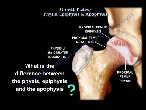 Growth Plates Physis Epiphysis & Apophysis - Everything You Need To Know - Dr. Nabil Ebraheim