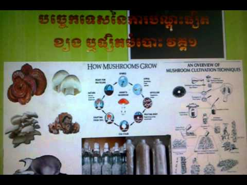 How to teach grow mushroom