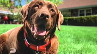 """ESPN Great Outdoor Games """"Dog"""""""