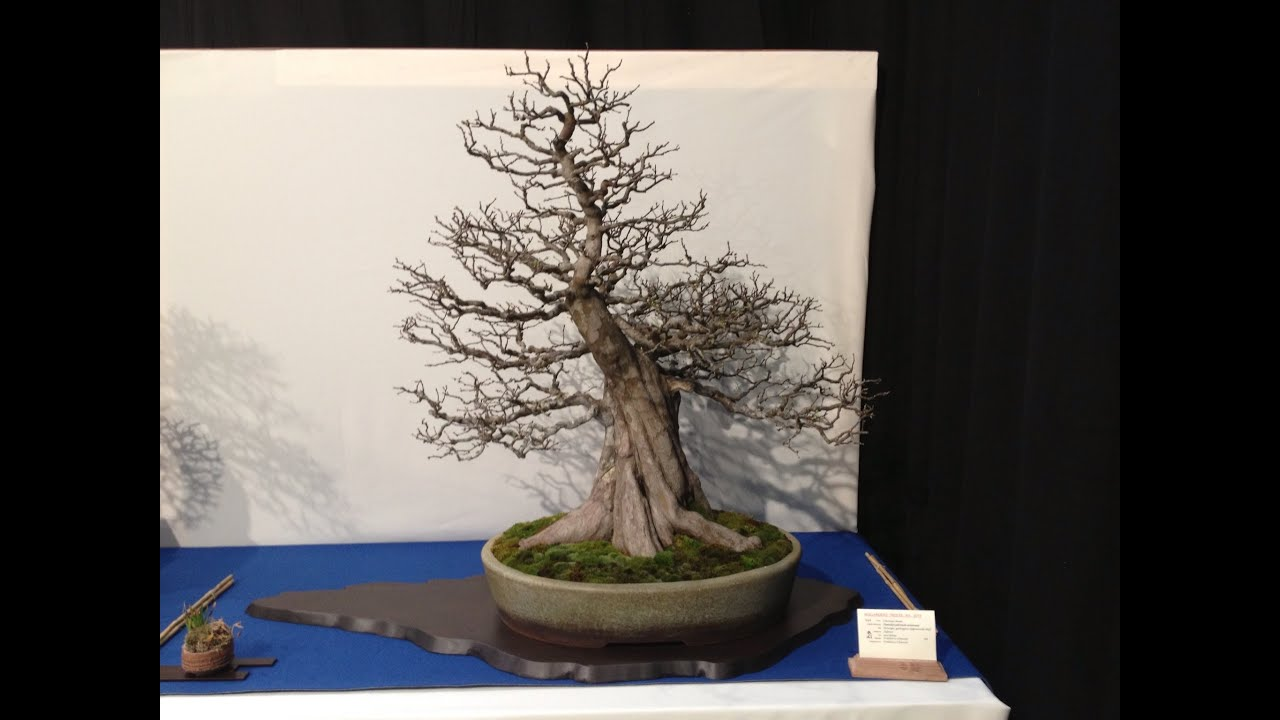 Nolanders Bonsai Show 2013 Part 2 Youtube Wiring Demo