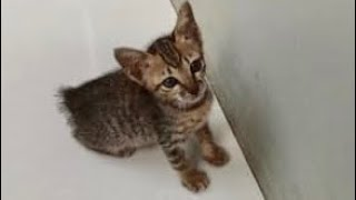 Rescue The Little Kitten Without A Tail. Episode 2
