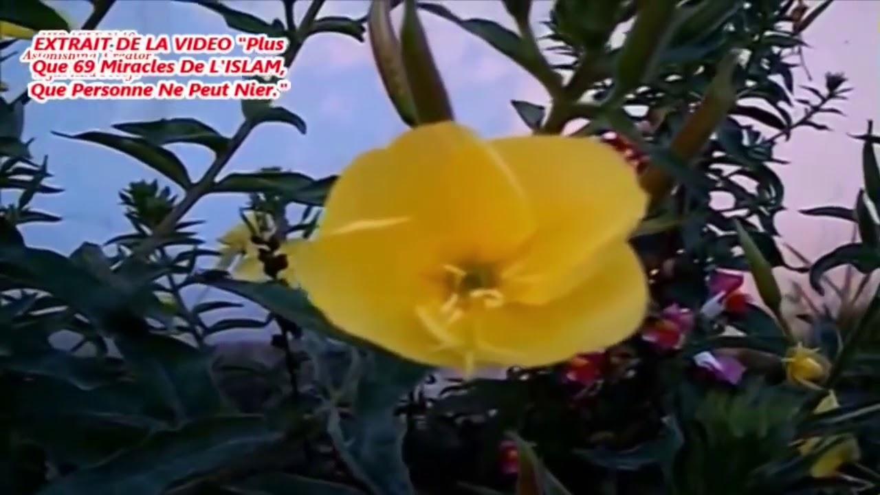 Reportage Cnn Miracle La Fleur Qui S Ouvre A L Appel A La Priere