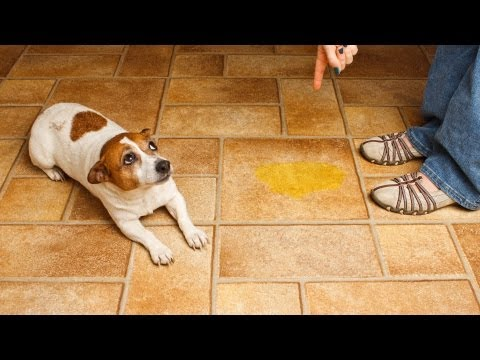 how-to-handle-potty-accidents-|-puppy-care