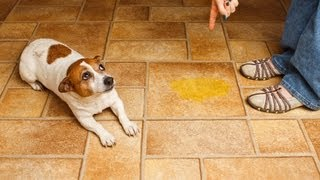 How to Handle Potty Accidents | Puppy Care
