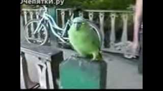 Попугай смеётся над туристами