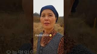 김장철 김장배추 산지직송!