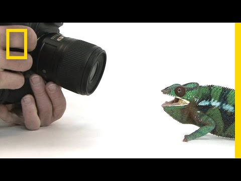 Watch: Photographing 12,000 Animals Is Hard Work   National Geographic