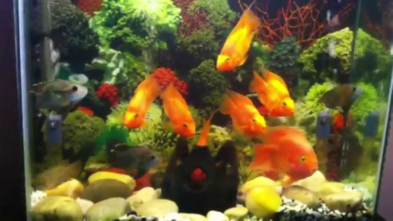 Parrot fish tank youtube for Fish tank full movie