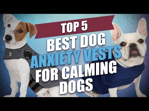 how to calm down dogs with anxiety