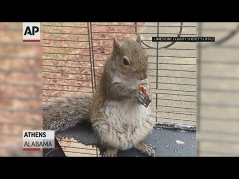 "Man Fed ""Attack Squirrel"" Meth to Keep It Aggressive"