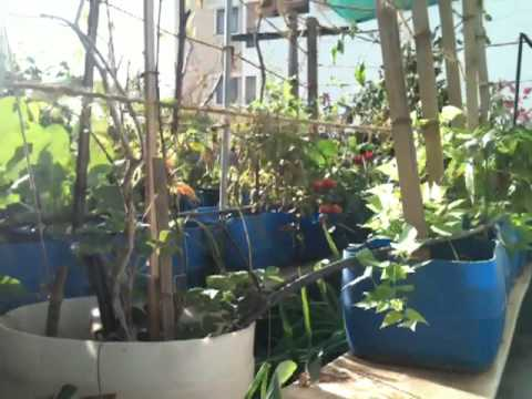 Terrace vegetable garden in bangalore youtube for Terrace kitchen garden ideas