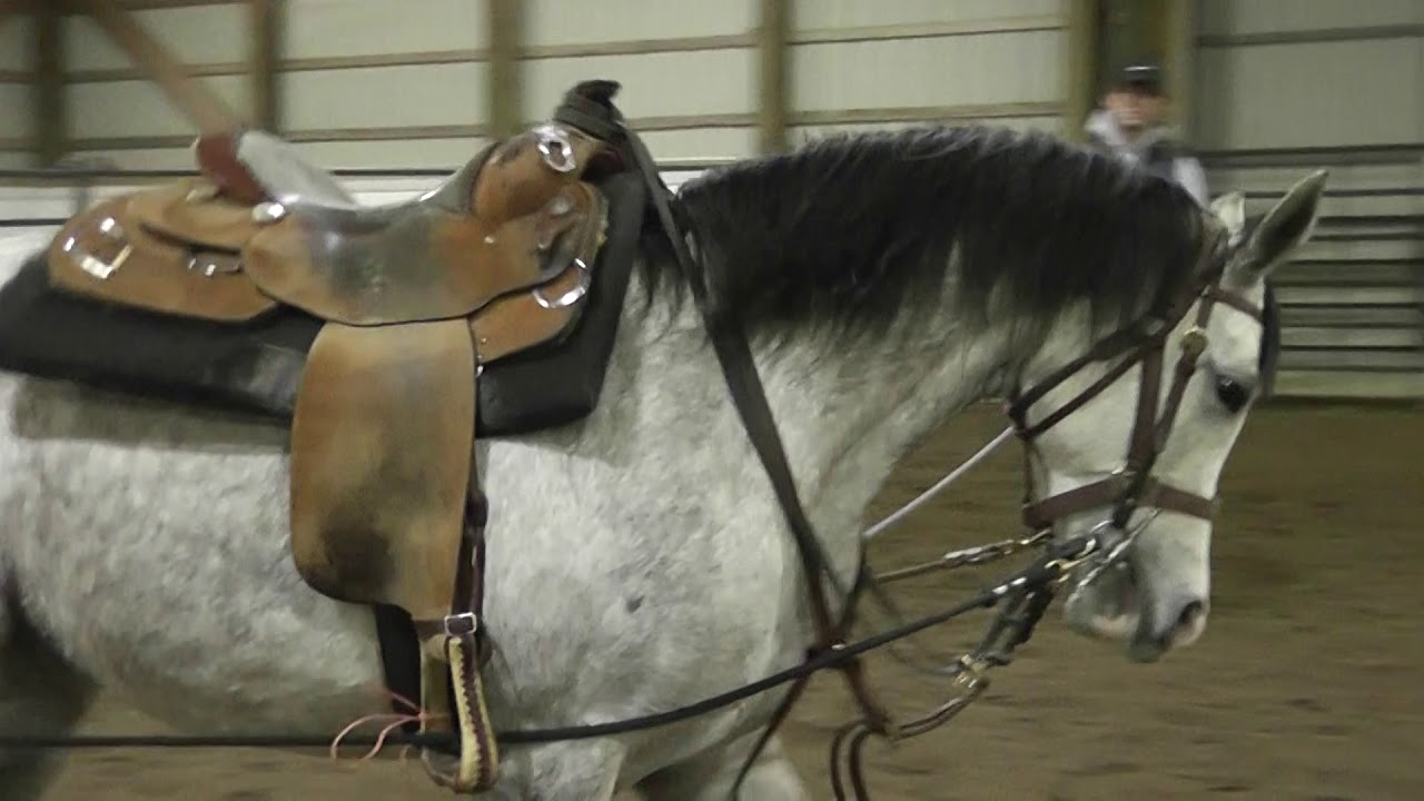 Long Lining Your Horse