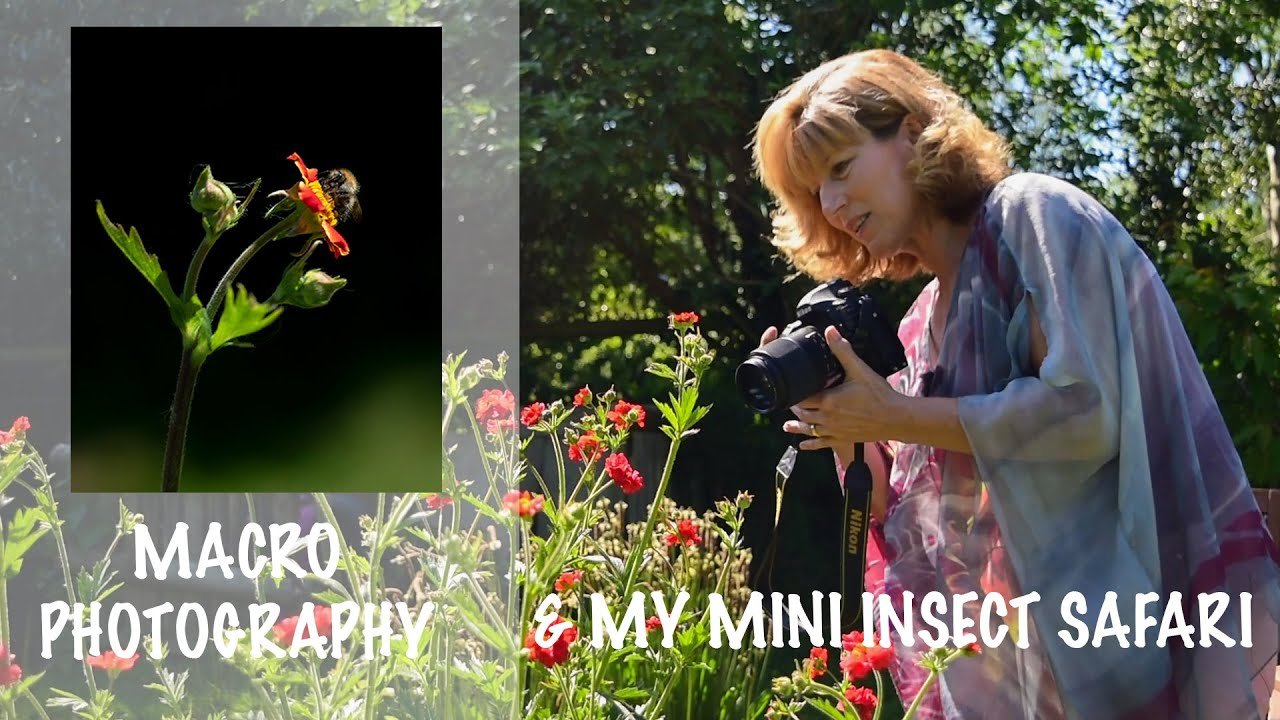 MACRO PHOTOGRAPHY - MY MINI INSECT SAFARI