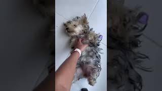 Perrito con cosquillas