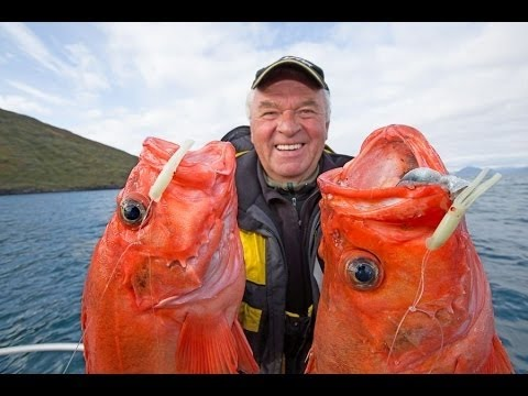 Fishing in Norway: The Rognsund, Sørøya, Seiland, Alta. Curative and redfish XXL