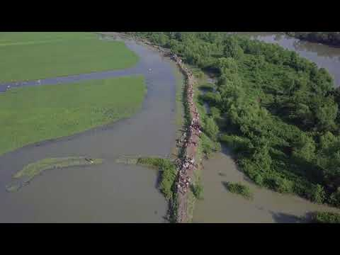 Drone video shows Rohingya fleeing | Heart touching | video by UNHCR refugee agency | 16th Oct 2017