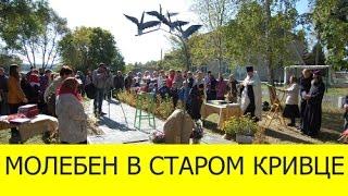 видео Николай Шестопалов