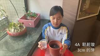 Publication Date: 2021-02-05 | Video Title: 農圃綠趣(三)
