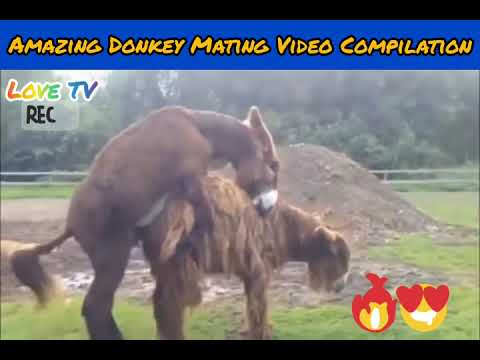 Download Amazing animals meeting compilation video   animal crossing & meeting with pets & wild animals #08