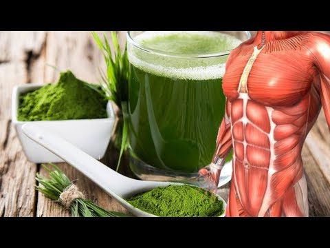 What Happens to Your Body if You Eat Spirulina Every Day