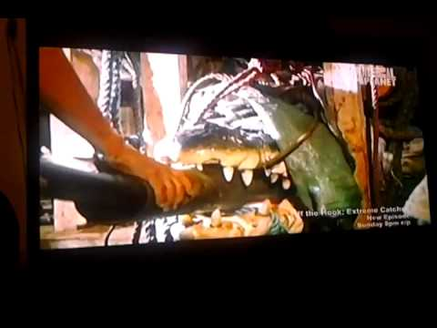 Lolong the Buaya In Animal Planet (USA Tv Show) P5 Travel Video