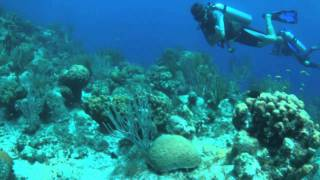 Diving Turks and Caicos Islands