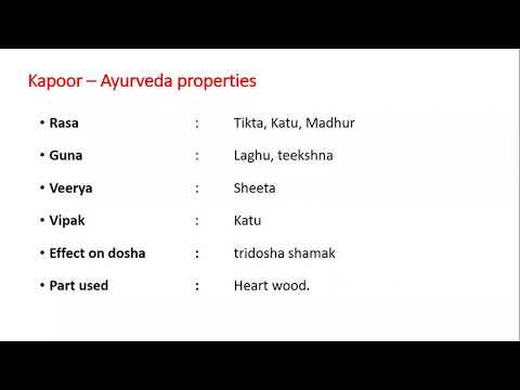 Karpur - Cinnamomum camphora by Dr Kamla R Nagar