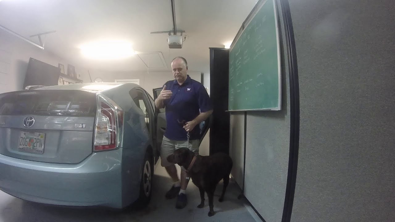 Central Florida Service Dog Training - Sade - Phase 1 - Vehicle Success