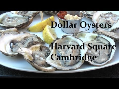 50 cents Oysters in Harvard Square - The Red House (Cambridge - Boston, MA) 哈佛生蠔 (牡蠣) #foodporn