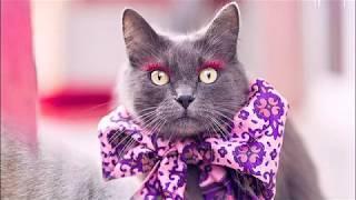 Коты Instagram  Стильная Инста-кошка Буона  Смешные коты с Instagram