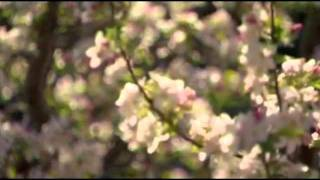 Dutch tulip mania documentary